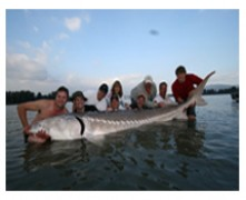 sturgeon fishing charters